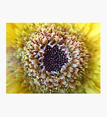 Macro Yellow Flower Center Photographic Print