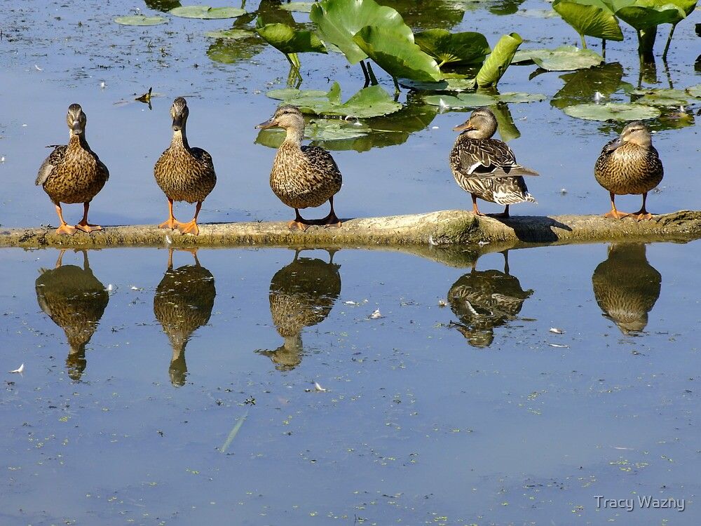 All My Ducks In A Row by Tracy Wazny