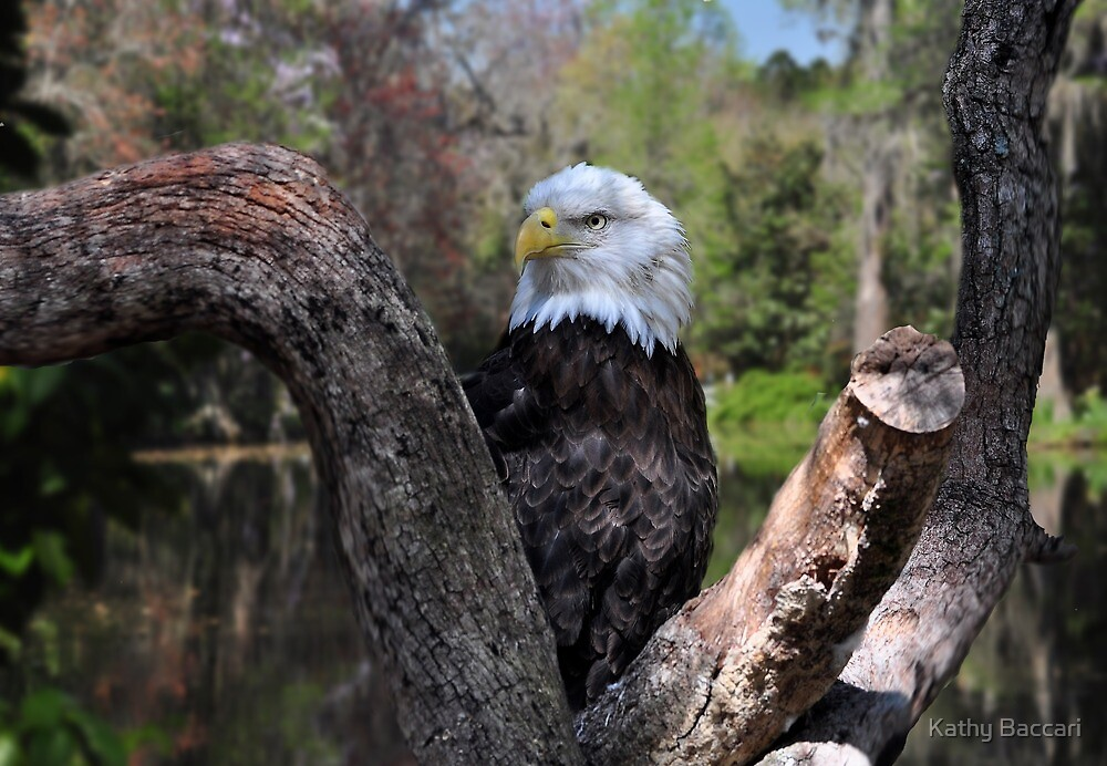 The Eagle Has Landed by Kathy Baccari