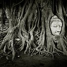 Buddha in the tree by laurentlesax