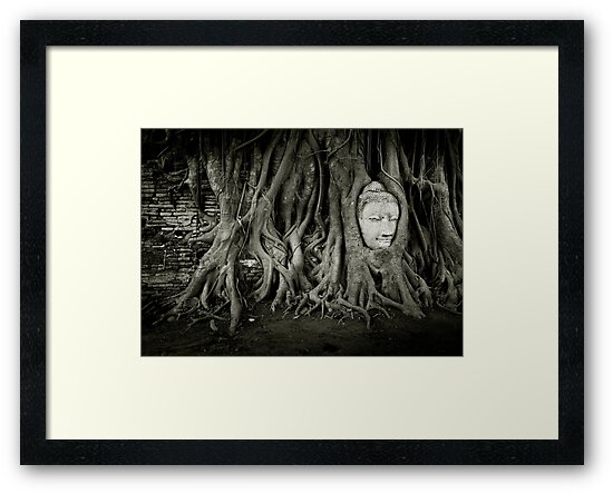 Buddha in the tree by Laurent Hunziker