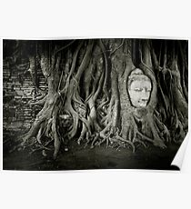 Buddha in the tree Poster