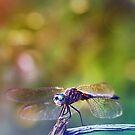 Dragonfly by EkaterinaLa