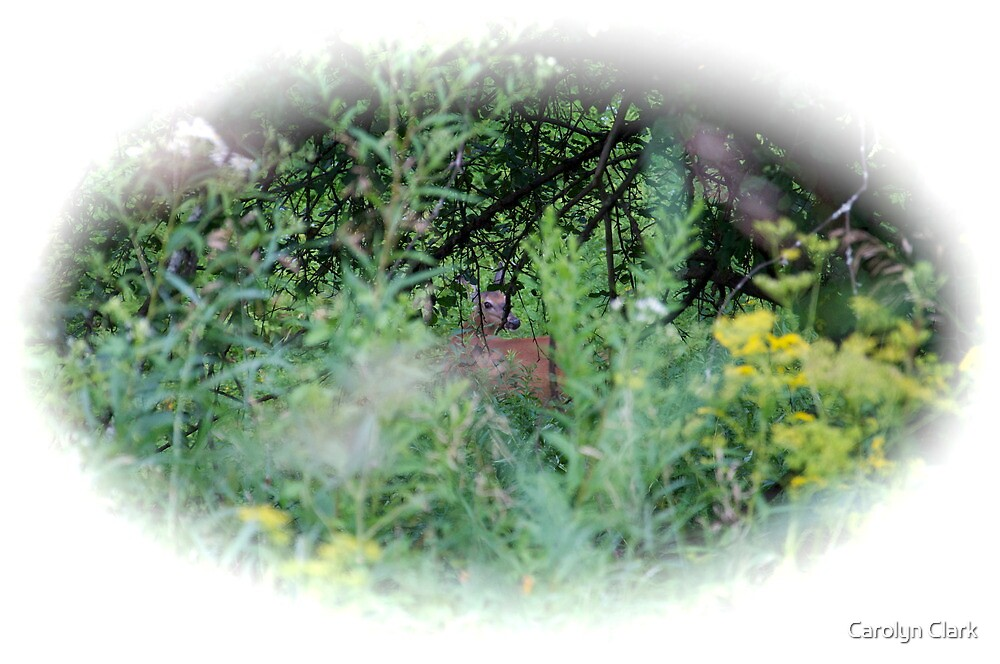 Peek a Boo 2 by Carolyn Clark