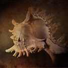 Shell Still Life by Barb Leopold