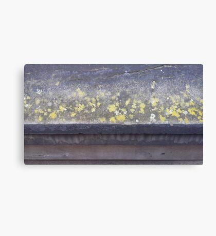 Lichen ledge Canvas Print
