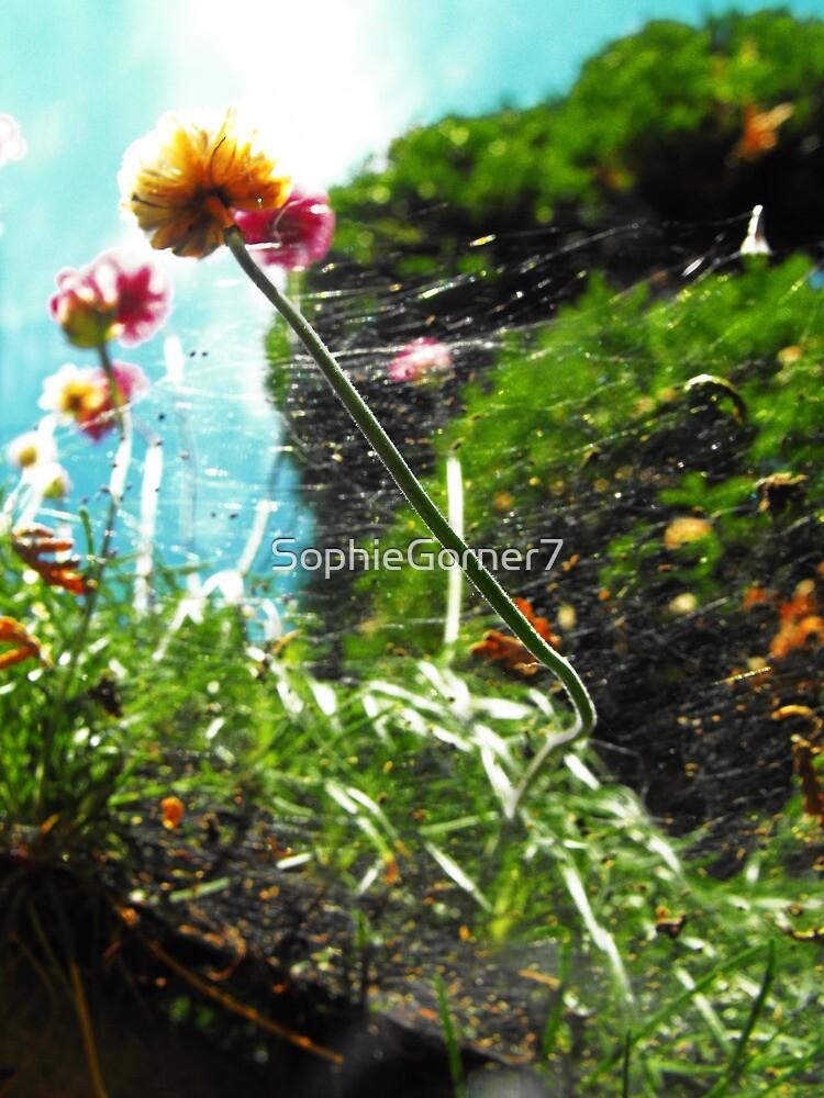 Cobwebs by SophieGorner7