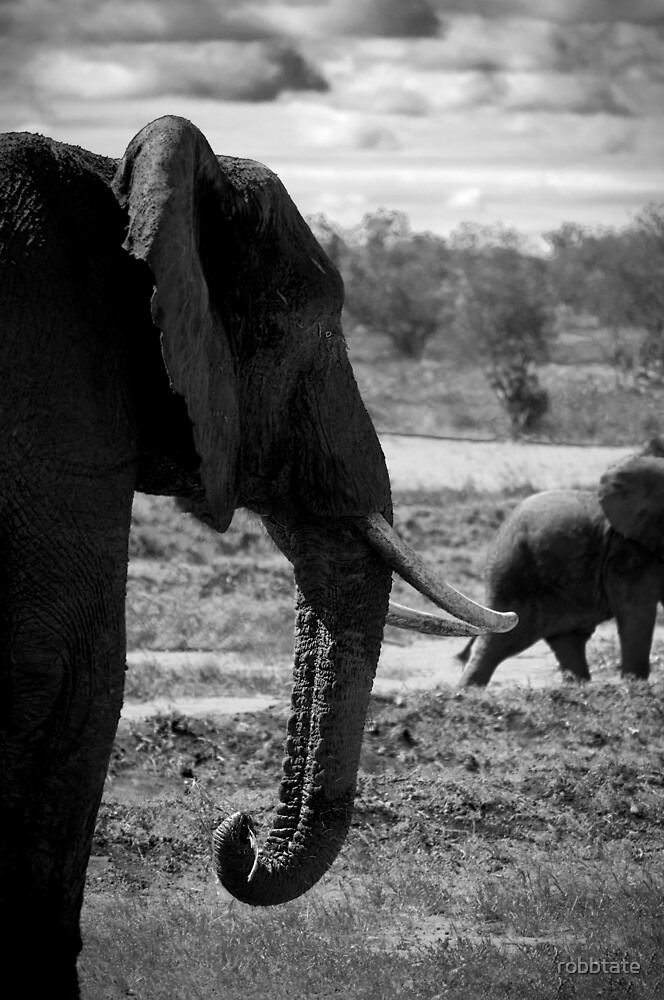 An Elephant Knows Best... by robbtate