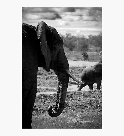An Elephant Knows Best... Photographic Print