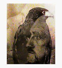 Hawks Photographic Print