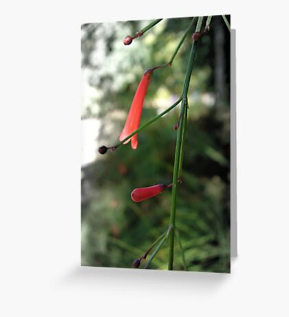 Bells are tolling Greeting Card