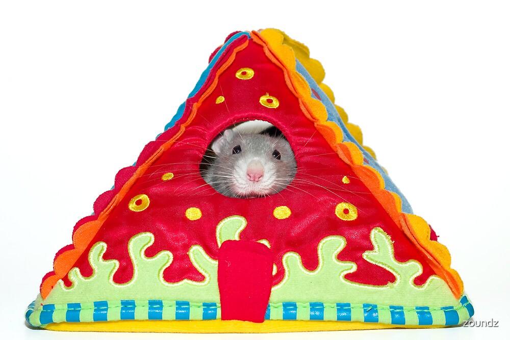 Rat House by zoundz