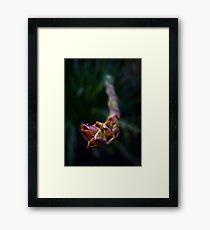 TRIFFID aka Gymea Lily Framed Print