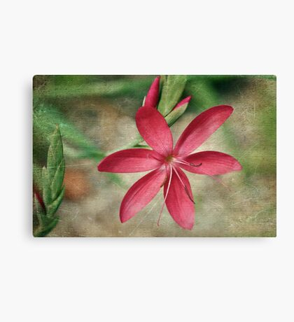 Blossoming Star Canvas Print