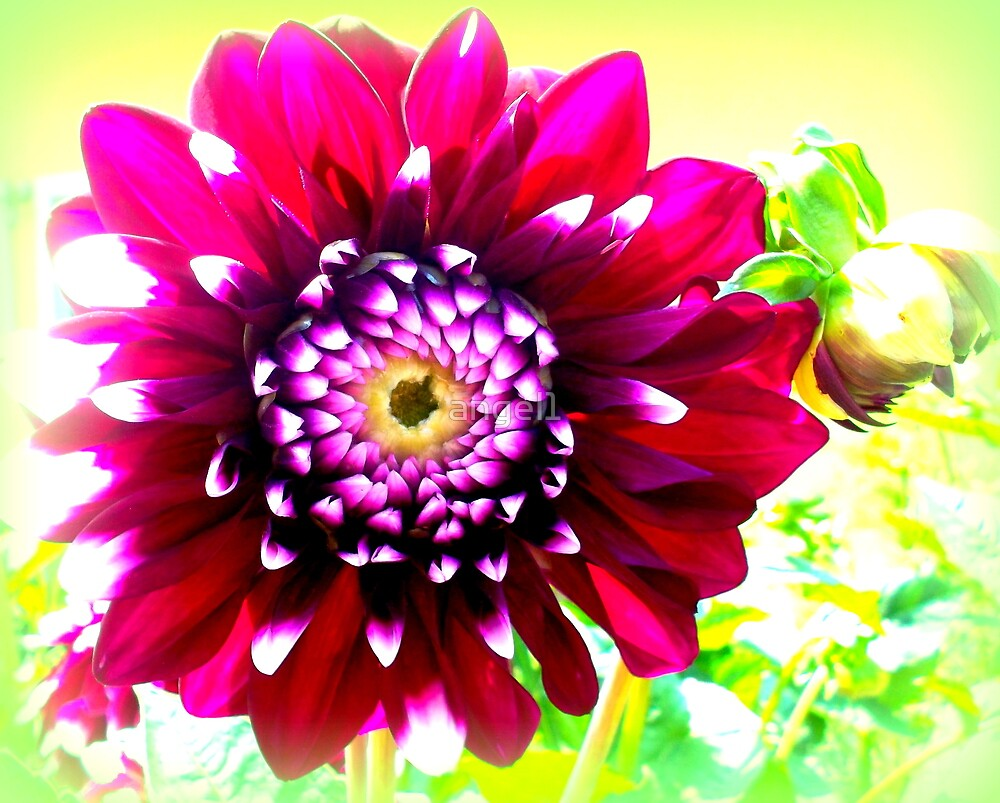 Aster by ©The Creative  Minds
