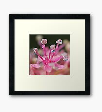 Pink Magic Framed Print