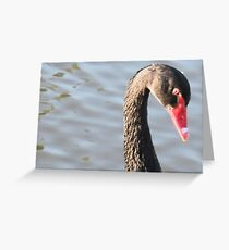 Black Swan Closeup Greeting Card