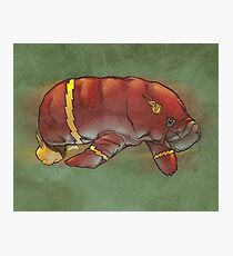 Flash manatee (Flashatee?) Photographic Print