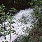 Fishhawk Falls by jschwab