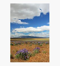 Lupines In Honey Lake Valley Photographic Print