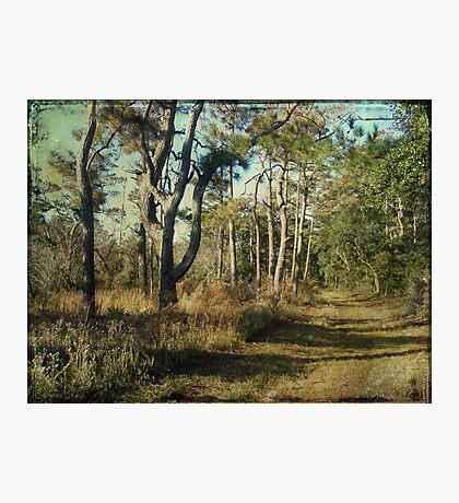 Beach Nature Trail - Buxton NC - Outer Banks Photographic Print