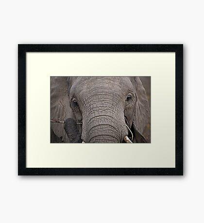 Elephant Fine Dining Framed Print