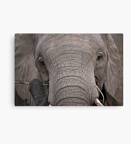 Elephant Fine Dining Canvas Print
