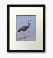 Walk on by. White-faced Heron - Egretta novaehollandiae Framed Print