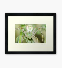 Spider! Framed Print