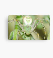 Spider! Canvas Print