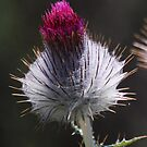 Thistle Bud by Ronald Hannah