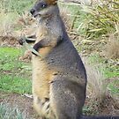 Eucalyptus anyone? Red-necked (Bennets) Wallaby - Macropus rufogriseus by Lydia Heap