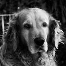 Portrait of my dog by borjoz