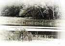 Egret Pond by KBritt