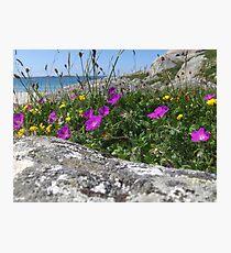 Coastal wildflowers Photographic Print