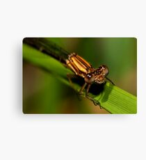 I guess that Damsels can really fly Canvas Print
