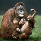 Orangutan Mother and Baby by Patricia Jacobs DPAGB BPE4