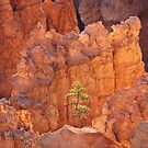 Hoodoo Pine by Owed To Nature