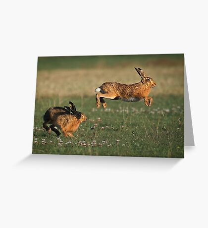 Hare Chase Greeting Card