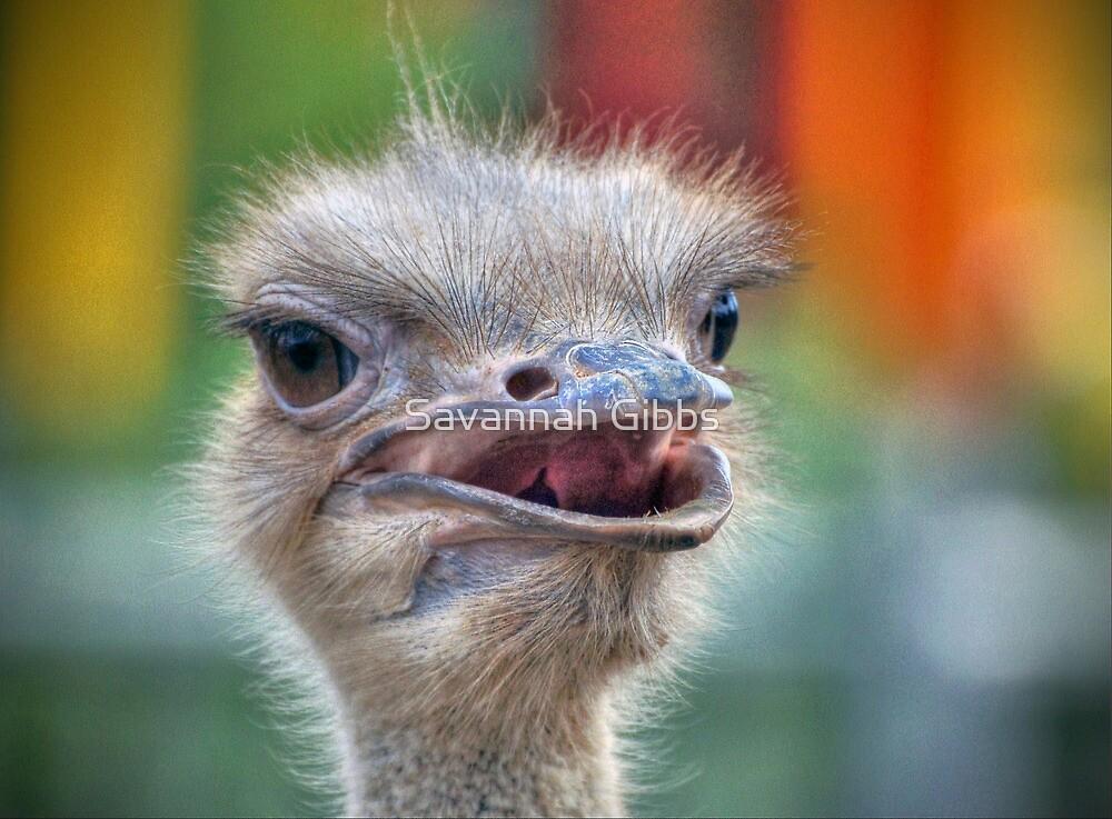 Ostrich by Savannah Gibbs