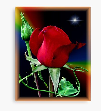 A Rose and a Star Canvas Print