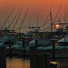 Harbor Sunrise by Sally Kady