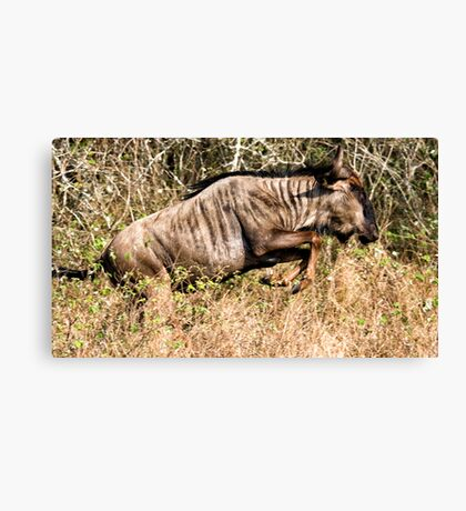 I May Not Be Pretty, But I Can Run ! Canvas Print