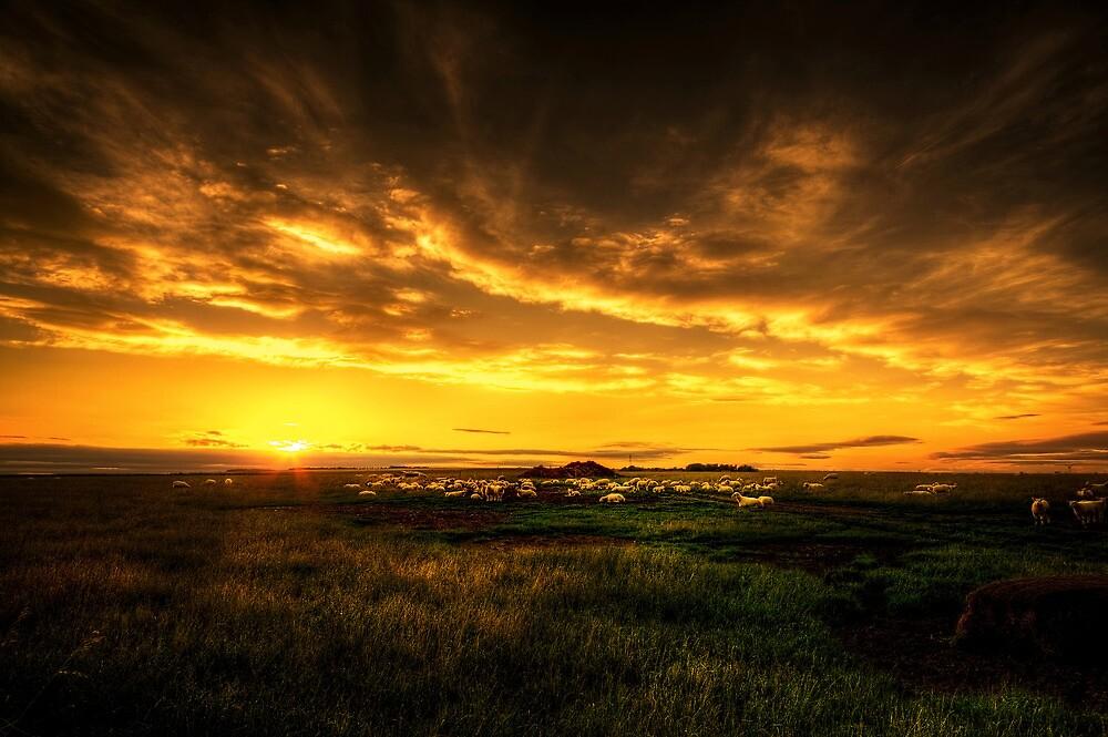 Yorkshire Countryside by Svetlana Sewell