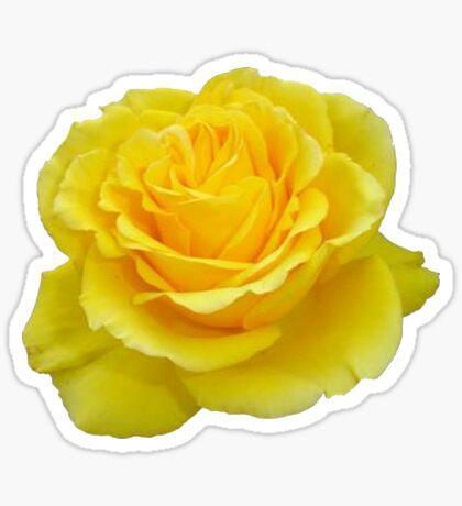 Beautiful Yellow Rose Closeup Isolated On White Sticker