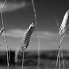 North Dakota Study in Black & White by Nate Welk