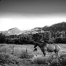 Sundance by Nate Welk
