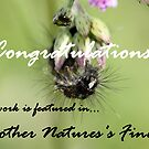 Mother Nature's Finest - Banner by cathywillett