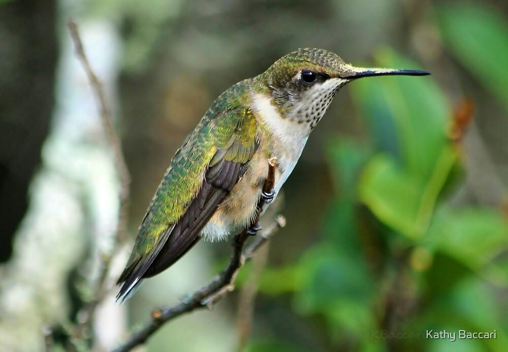 Sweet Little Hummingbird by Kathy Baccari