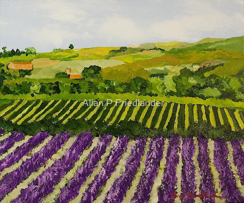 Harvest Glory by Allan P Friedlander